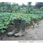 2 - Cultivar legumes